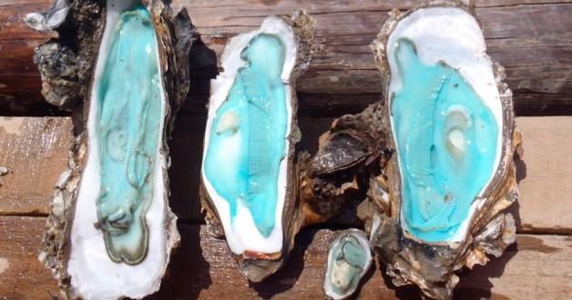 Blauwe oesters