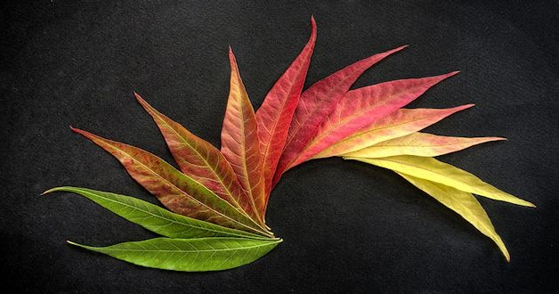 De chemie van herfstkleuren