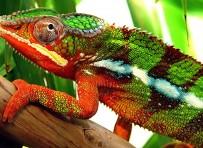 Kameleonchemie